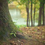 Ładny oraz {porządny ogród to nie lada wyzwanie, w szczególności jak jego pielęgnacją zajmujemy się sami.